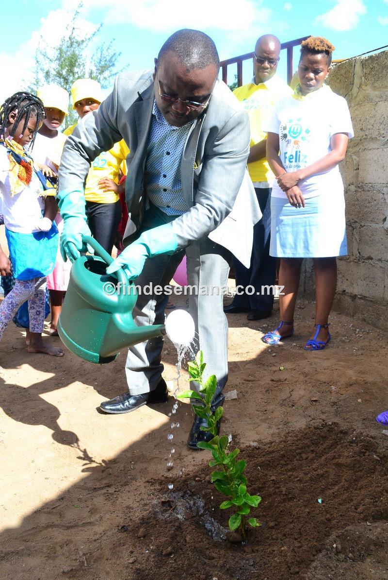 Plantio de árvores 1